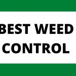 5 Best Weed Controls 2021 Reviews   Lawnscanner