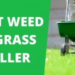 5 Best Weed and Grass Killers 2021 Reviews | Lawnscanner