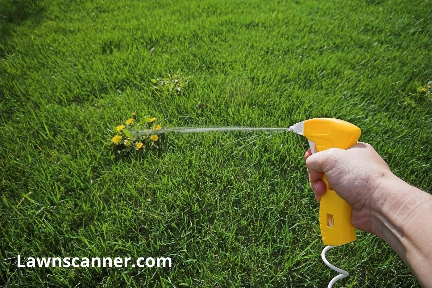 BEST WEED AND FEED SPRAY